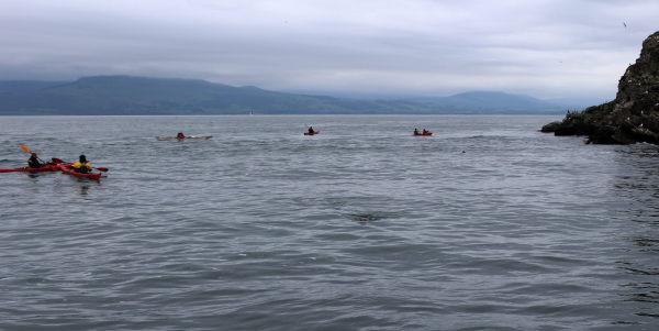 Seadogs (Seals)