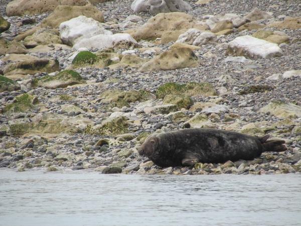 Ye olde seal